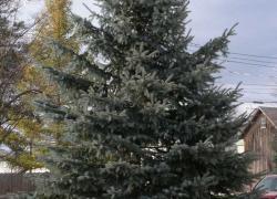 Christmas tree ready to light