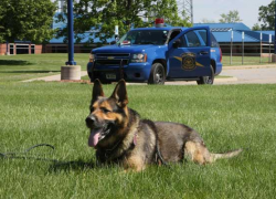 MSP canines receive GPS collars