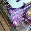 No explanation for purple squirrel