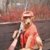 Dogs must wear hunter orange