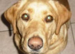 Protect Michigan pets and livestock