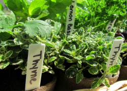 Add tasty edible plants to your landscape