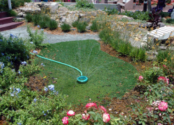 Help your landscape beat the heat this summer