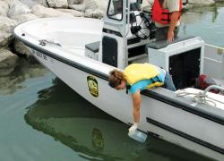 Six Lake Erie water samples test positive for Asian carp eDNA