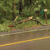 Tree falls on pickup, injures man