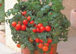 Container Gardening: Choosing the right plant for the pot