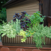Creative ways to use containers in your landscape