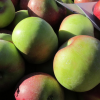 Fresh Market—the Apple