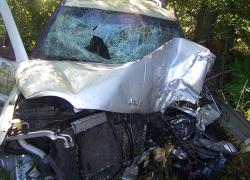 Dog thrown through windshield