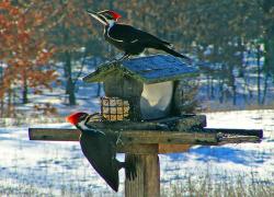 National bird feeding month