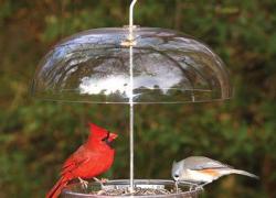 Help nurture kids' love of nature with easy, basic, backyard bird-feeding tips