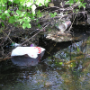 Cedar Creek cleanup this Saturday