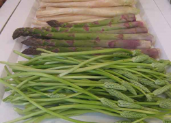 Asparagus—the Prince and the Pauper