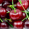 Fresh Market: Cherries