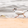 Celebrate 40 years of Michigan'sEndangered Species Act