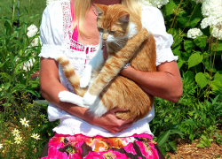 Hospice cat therapy