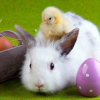 This Easter, give toy bunnies, not live ones