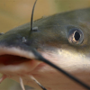 Weekly fishing tip