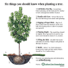 Join the Arbor Day Foundation in September