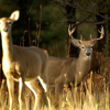 Deer hunting preview for Michigan
