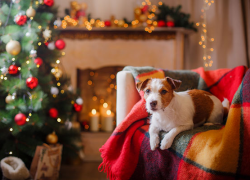 Keep pets healthy over the holidays