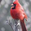 National birdfeeding month: Great Backyard Bird Count