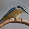 NATIONAL BIRDFEEDING MONTH
