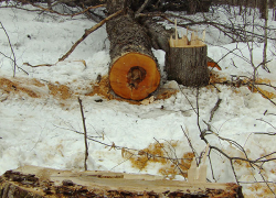 DNR arrests suspects in northern Lower Peninsula veneer log thefts