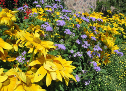Back to Basics: Low maintenance flower garden care