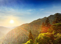 Help plant trees in high-need national forests