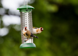 Is your lawn and garden bird-friendly?