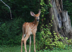 Five ways to protect your garden from the deer