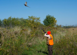 Fourth annual ladies' guided pheasant hunt