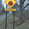 Courtland man dies after crashing into tree