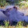 Dust baths