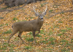 Tips for a safe, enjoyable hunting season