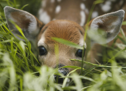 Find a fawn? Enjoy the experience, but from a distance