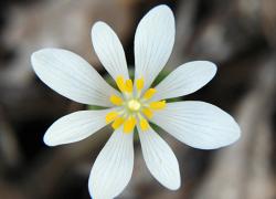 Seeing Spring wildflowers