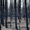 Caution can help prevent human-caused wildfires
