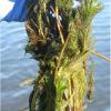 Preventing the spread of aquatic invasive species