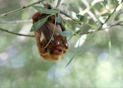 Showcasing the DNR: Saving Michigan's bats