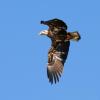 Eagle successes