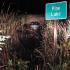 Man drives car into Pine Lake
