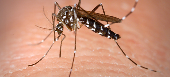 MDHHS reports four new cases of mosquito-borne disease
