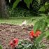 White robin