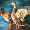 K-12 students invited to enter 2020 Michigan Junior Duck Stamp Contest