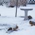 Squirrel Colors