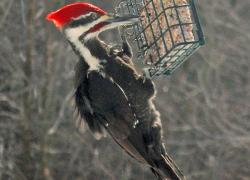Top 10 winter bird foods