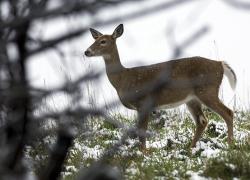 Hunter assistance helps identify 65 CWD-positive deer