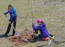Showcasing the DNR: Save energy this spring by planting a tree